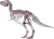 Het rode metaalSkelet van Tyrannosaurussen rex vector illustratie