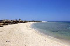 Het rode overzees Egypte van het Abu dabbab zuiden Royalty-vrije Stock Afbeelding