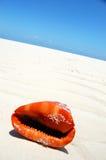 Het rode overzeese shell spreken   Stock Foto