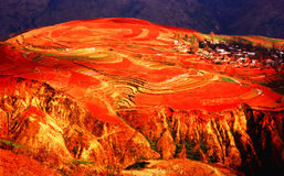 Het rode plateau van de Provincie van Yunnan Royalty-vrije Stock Afbeelding