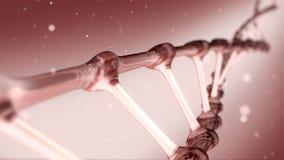 Het rode spiraalvormige roteren van DNA stock footage