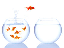 Het rode vissen springen Stock Foto's