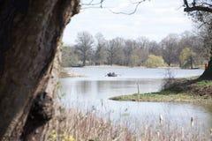 Het roeien van boot op een meer; reedbeds en boom in voorgrond stock foto