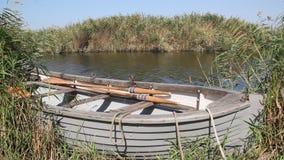 Het roeien van boot in het riet stock video