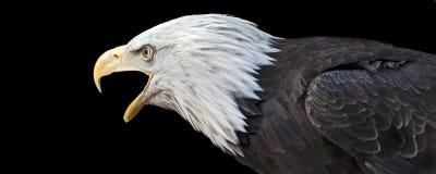 Het roepen van adelaar Royalty-vrije Stock Afbeeldingen