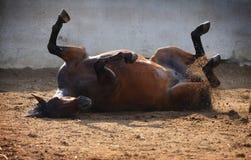 Het rollen van het paard stock fotografie