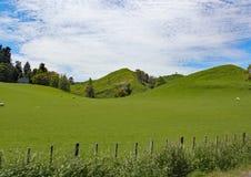 Het rollende platteland van het waikatogebied van Nieuw Zeeland royalty-vrije stock foto's
