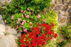Het rood en nam kleine bloemen met groene bladeren en gras op steen toe royalty-vrije stock afbeeldingen