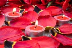 Het rood, schouwt branden dichtbij de rode tulpenbloemblaadjes Gevallen Tulip Petals stock afbeeldingen