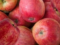 Het rood van appelen Royalty-vrije Stock Foto's
