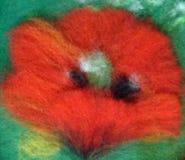 Het rood van de bloemwol Stock Afbeelding
