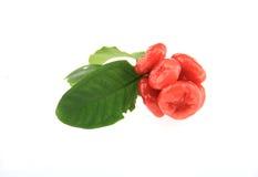 Het rood van de de appelkleur van Java Stock Fotografie