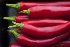 Het rood van de Spaanse peperpeper Royalty-vrije Stock Foto's
