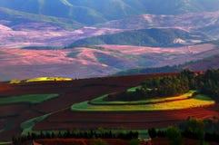 Het rood is van het land benieuwd Stock Fotografie