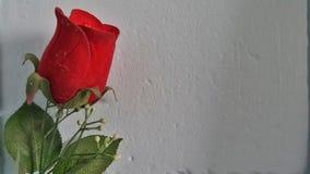 Het rood van rozen Stock Fotografie