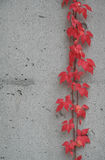 Het rood verlaat 2 Stock Afbeeldingen