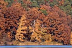 Het roodbruine Gebladerte van de Daling bij Meer stock foto's