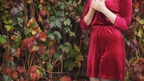 Het roodharige jonge meisje bevindt zich dichtbij de haag en houdt bladeren in haar handen stock video