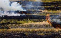 Het rook gebrande gevaar van het strostoppelveld Royalty-vrije Stock Foto