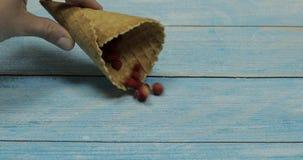 Het roomijs van de bes Bessen van aardbei in een wafel op een blauwe houten achtergrond stock footage