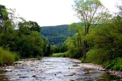 Het rotsachtige rivierbed van de bergrivier op beboste heuvels als achtergrond Stock Foto