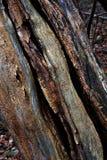 Het rotten boomtexturen Royalty-vrije Stock Fotografie