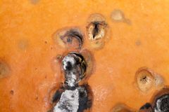 Het rotten pompoenclose-up Stock Foto