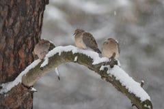 Het rouwen duiven in de winter Royalty-vrije Stock Afbeelding