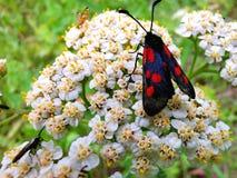 Het rouwen vlinder stock afbeelding