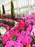 Het roze is binnen Royalty-vrije Stock Foto's