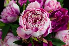 Het roze Close-up van Pioenrose flower stock foto's