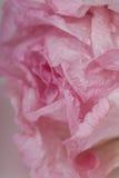 Het roze Document nam toe Stock Foto