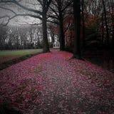Het roze doorbladert Royalty-vrije Stock Fotografie
