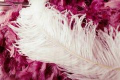 Het roze en het wit van veren Stock Foto