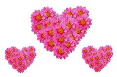 Het roze hart van dahiliabloemen Stock Foto