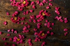 Het roze omfloerst op Hout 2 Royalty-vrije Stock Foto