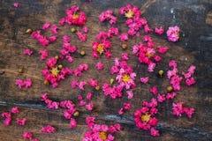 Het roze omfloerst op Hout 4 Stock Afbeelding