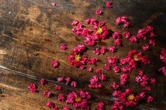 Het roze omfloerst op Hout Stock Foto's