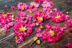 Het roze omfloerst op Hout 8 Royalty-vrije Stock Fotografie