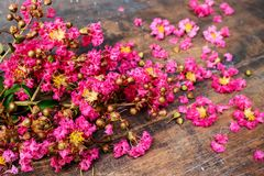 Het roze omfloerst op Hout 9 Royalty-vrije Stock Afbeeldingen