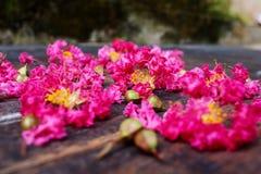 Het roze omfloerst op Hout 7 Royalty-vrije Stock Fotografie
