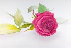 Het roze rozewater schilderen Royalty-vrije Stock Afbeelding