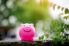 Het Roze Spaarvarken van het spaarvarken in het natuurgebied heldergroen in t royalty-vrije stock afbeeldingen