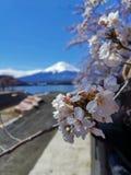 Het roze takje van de kersenbloesem en MT fuji royalty-vrije stock afbeelding