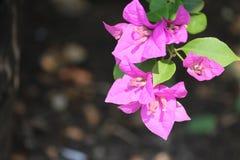 Het Roze van de aardfotografie bloeit groene bladeren Stock Afbeeldingen