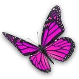 Het roze vlinder vliegen stock fotografie