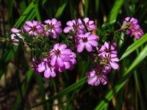 Het roze zou en groen altijd moeten worden gezien Stock Foto's