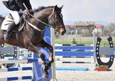 Het ruiter springen op bruin paard Royalty-vrije Stock Foto