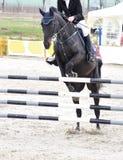 Het ruiter springen op zwart paard Royalty-vrije Stock Foto