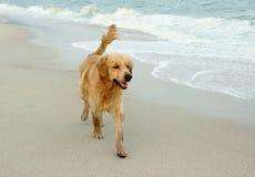 Het runing van de hond. Royalty-vrije Stock Afbeeldingen
